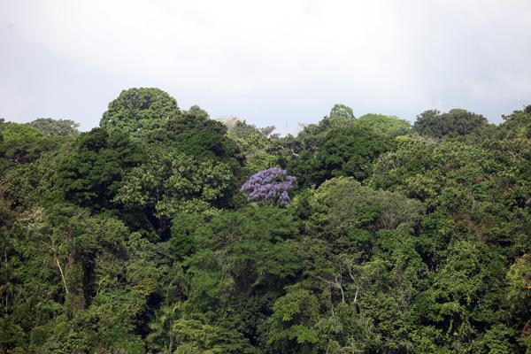 Rainforest in Panama