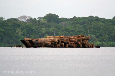 Raw logs in Gabon