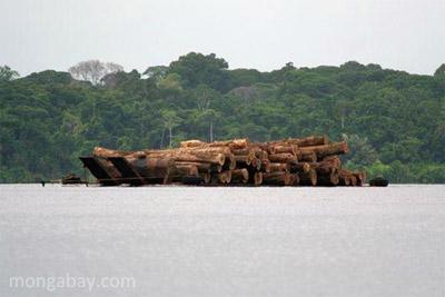 Raw logs in Gabon