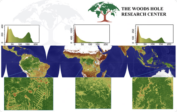 Global forest carbon map.