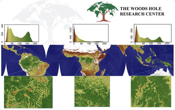 Mapa de biomassa / Courtesia do WHRC
