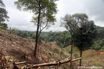 Illegal forest clearing by colonists in an Afro-indigenous reserve