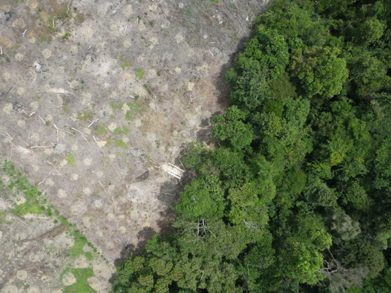 Aerial Photograph From The Drone Showing Forest Clearing Courtesy Of Lian Pin Koh
