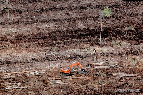 Active clearance of peat swamp forest by APP pulpwood supplier PT Mutiara Sabuk Khatulistiwa