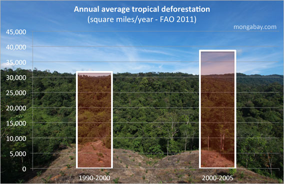 global deforestation rate
