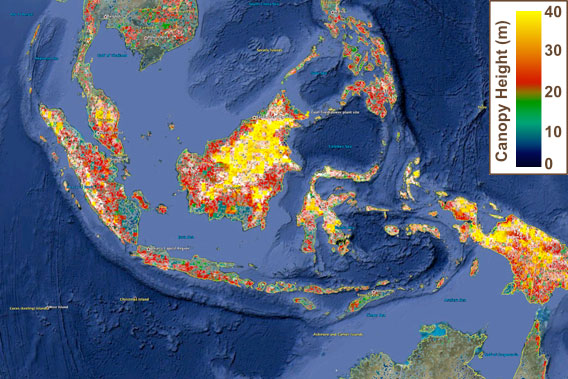 Now on google earth nasa updates global forest height map gumiabroncs Image collections