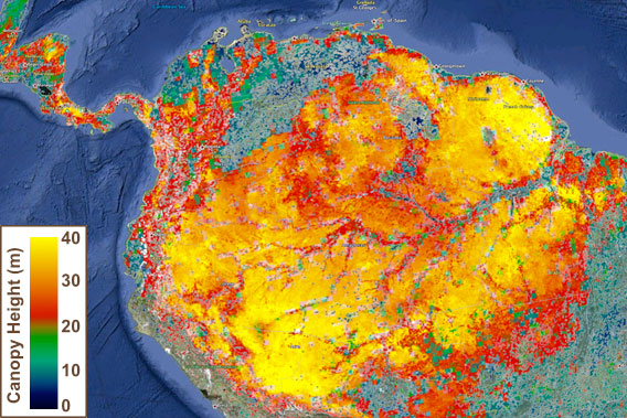 Now on google earth nasa updates global forest height map canopy height in the amazon rainforest gumiabroncs Gallery