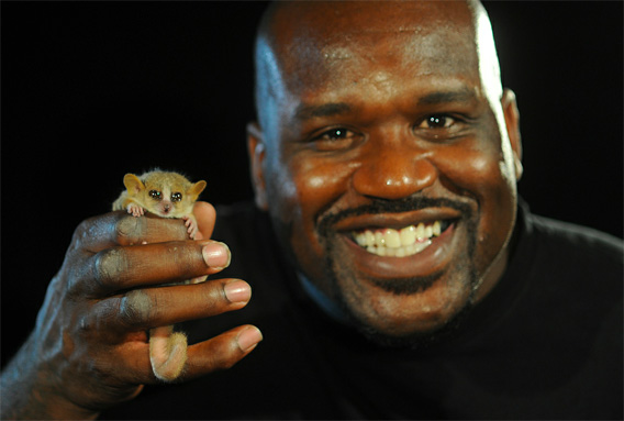Shaq with a mouse lemur.