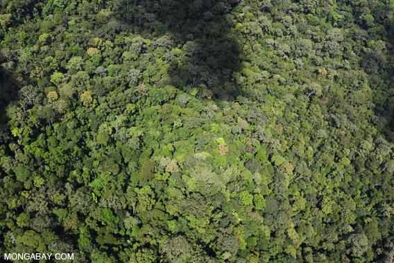 Rainforest in Borneo.