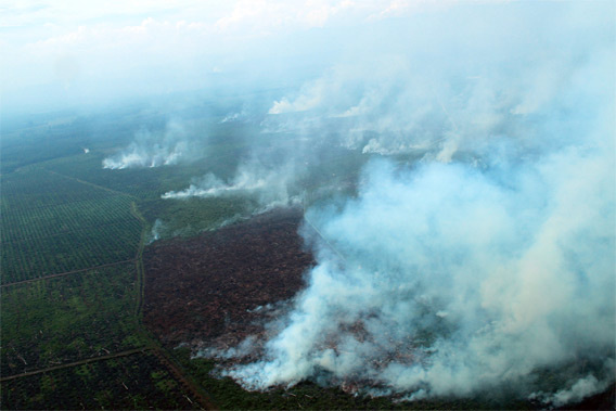 Fires in Tripa. Courtesy of the Sumatran Orangutan Conservation Programme