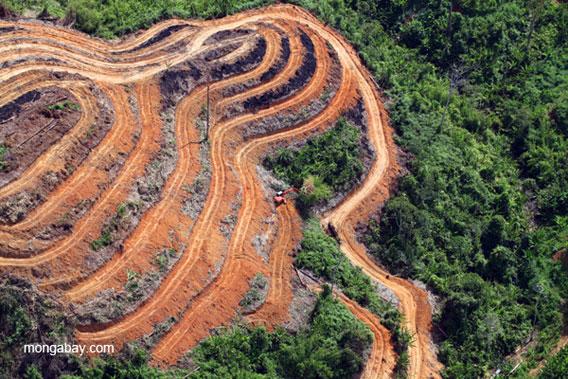 logging the rainforest essay