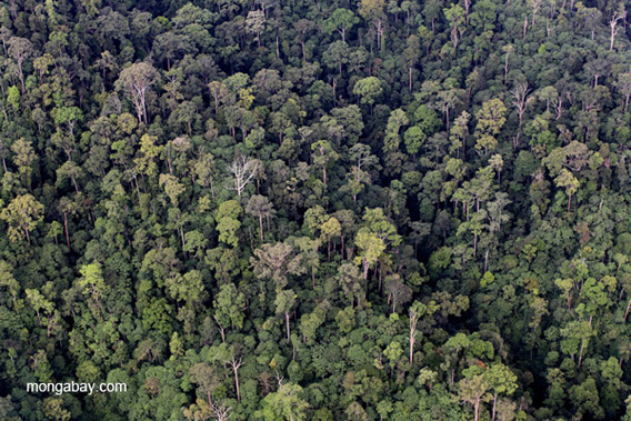 Aerial view from a helicopter of the Borneo rainforest