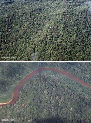 Amazon rainforest diversity.