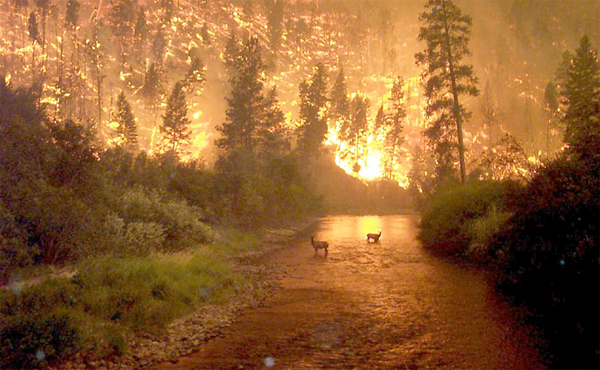 forest fire in alaska