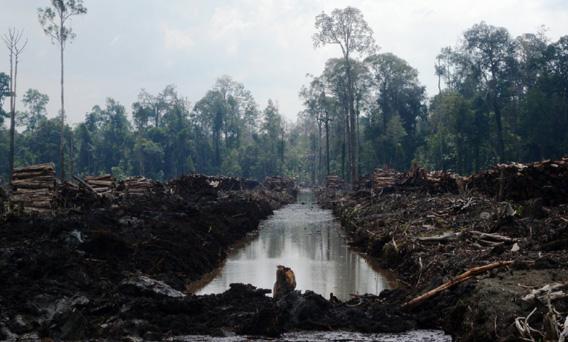 Deforestation in Sumatra by PT. Suntara Gajapati