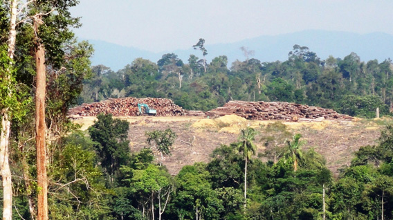 Deforestation in Sumatra by PT. Suntara Gajapati