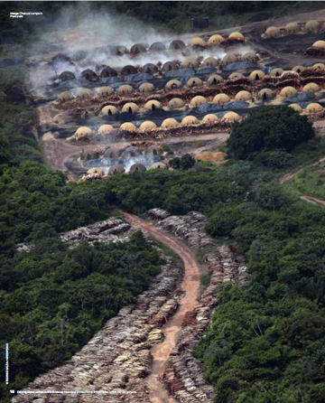Pig iron deforestation