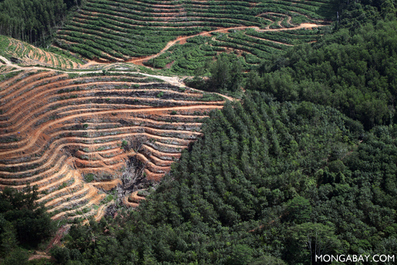 Industrial timber plantation in Borneo
