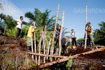 Dosan palm plantation.