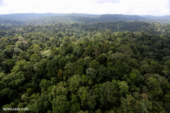 Forest managed as an FSC-certified concession in Sabah, Malaysia.