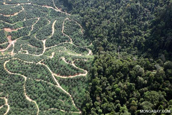Oil palm plantation adjacent to native rainforest.