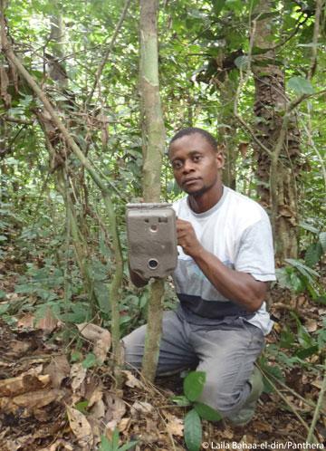 El asistente de campo Arthur Dibambo coloca una cámara trampa. Foto por: Laila Bahaa-el-din/Panthera.