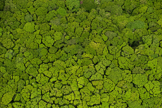 Aerial View of Rainforest, Iwokrama Reserve. Photo: © Pete Oxford/iLCP.