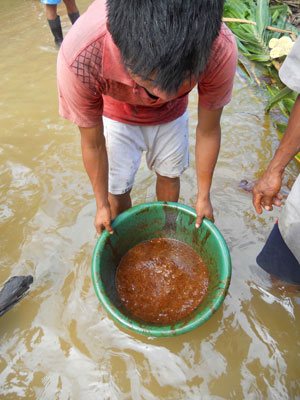 An indigenous community member cleaning up Maple Energy's oil spill. Photo courtesy of Amazon Watch.
