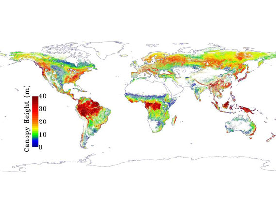 NASA map of global forest height, the redder the taller, the bluer the shorter. Image courtesy of NASA.