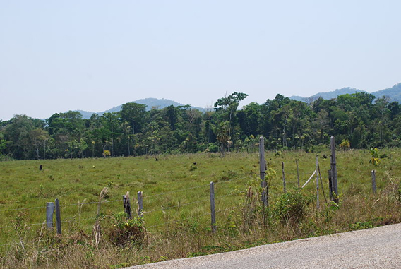 Pasture with rainforest behind in the Lacandon rainforest. Photo by: Alejandro Linares Garcia.