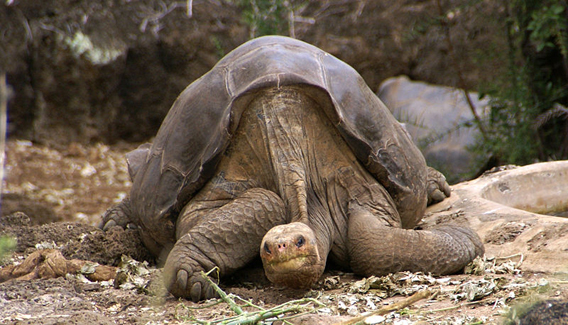 Lonesome George, the last of his kind, has passed away.