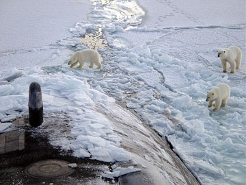 Polar bears approach a U.S. attack sub 280 miles from the North Pole in an encounter that would have been unimaginable a century ago. As the sea ice melts and the Arctic warms, many nations see not a climate warming, but an opportunity to exploit the region for resources. Photo by: U.S. Navy.