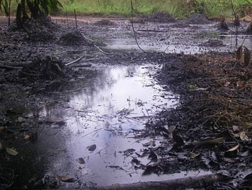 The impacts of an oil spill in Block 1-AB near the community of Nueva Jerusalem. Photo courtesy of: Amazon Watch.