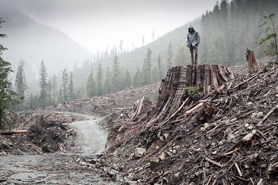 This has become Watt's most popular and widely viewed photo to date. It was taken on a foggy February day in a haunting clearcut near the Avatar Grove. It has since been printed in multiple books, magazines, and museums and was recently awarded second place in the International Conservation Photography Awards 'Natural Environment at Risk' category. Photo by: T.J. Watt.