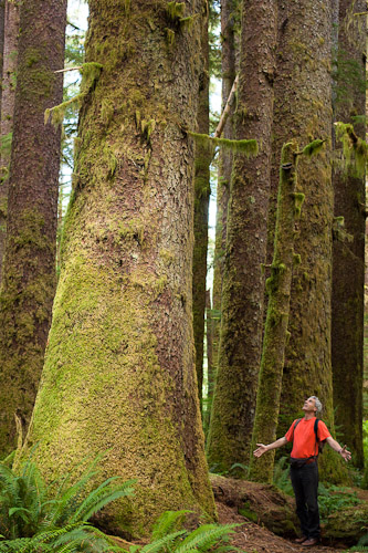 Watt says: 'I snapped this candid photo of a German tourist who had flown across the world just to see the giant spruce trees of the Carmanah-Walbran Provincial Park. His amazement and wonder while arriving at of the first big stands of trees was beautiful.''