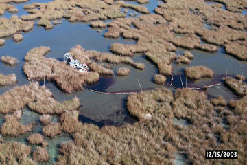 Oil spill responders trying to recover oil from a marsh during the Mendicant Island incident. Photo by: NOAA.