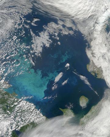 Phytoplankton bloom in Barents Sea. Photo by: NASA.