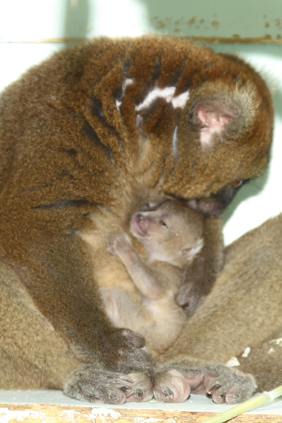 Mom and baby, which has yet to be named. Photo by: Dave Rolfe.