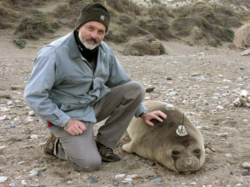 Claudio Campagna and a juvenile elephant seal with a satellite tag. Photo by: V. Zavattieri.