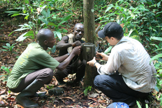 Setting up a camera trap, Sapo National Park, Liberia © Ben Collen/Zoological Society of London.