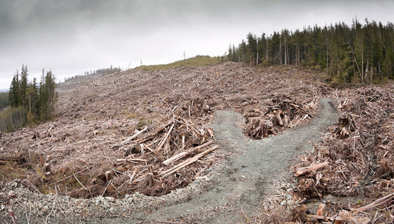 An old-growth clearcut just outside the boundaries of the Carmanah-Walbran Provincial Park.
