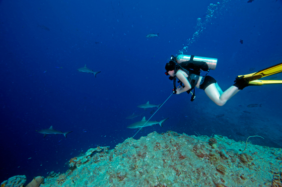 Tourism in Palau makes sharks worth more alive than dead. Here a diver in Palau swims with five reef sharks. Photo by: Todd Essick..