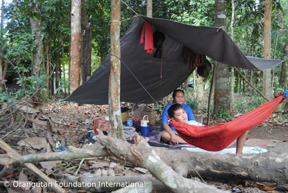 This 'pondok' is where families harvest durian fruits. Photo courtesy of Orangutan Foundation International.