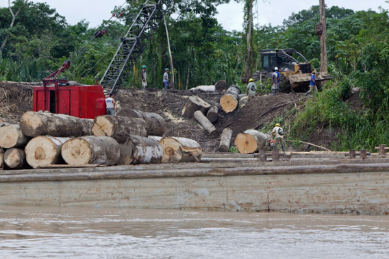 Logged wood off the Ucayali River in Peru. Photo by Toby Smith/EIA.