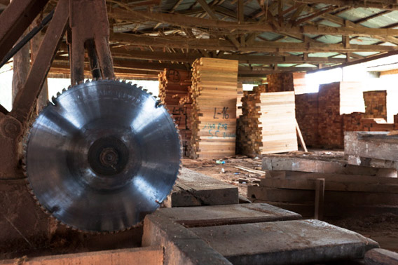 The EIA team visit a saw-mill that processes cedar and other timbers from the Loreto Forest. Photo by Toby Smith/EIA.