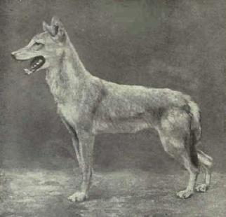 Egyptian jackal is actually ancient wolf