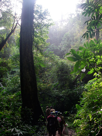 Hiking through the forests of Vietnam. Photo by: Jodi J. L. Rowley/Australian Museum.