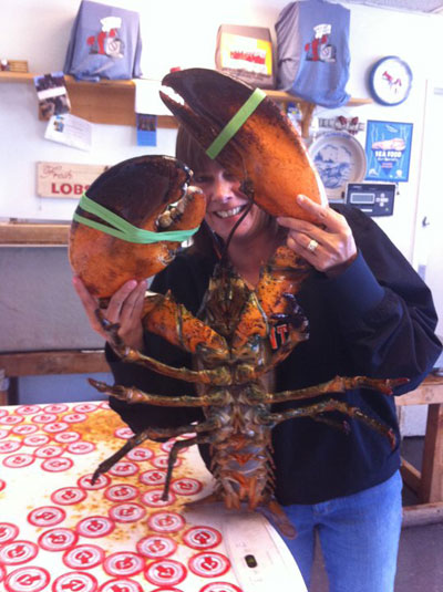 Caught off the coast of Canada, this 18-pound American lobster was saved from being cooked by a seafood distributor in San Francisco and now has a new home at the New York Aquarium. Photo courtesy of the Wildlife Conservation Society (WCS).