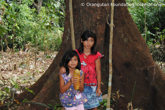 Girls in Borneo holding a cempadak fruit under a durian tree. Photo courtesy of Orangutan Foundation International.