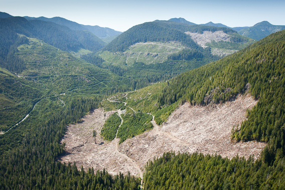 An aerial view taken over a recent clearcut located within the last 4percent of valley bottom old-growth that remains on southern Vancouver Island.